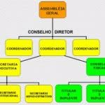 Organograma Funcional – Modelos